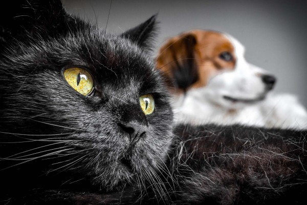 Zorro & Milo